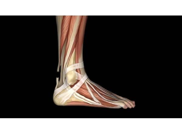 asil-tendonu-kopmasi